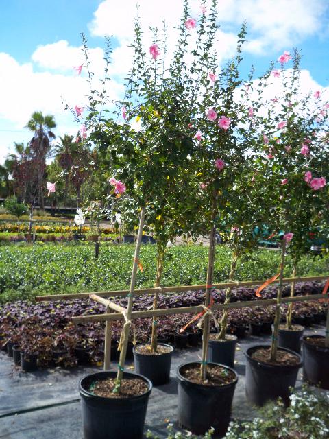 Creative Cultivations Landscape Maintenance Inc Trees